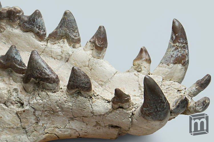 https://mars.minimuseum.com/mm2/specimens/sz-01/11-HELL-PIG.jpg