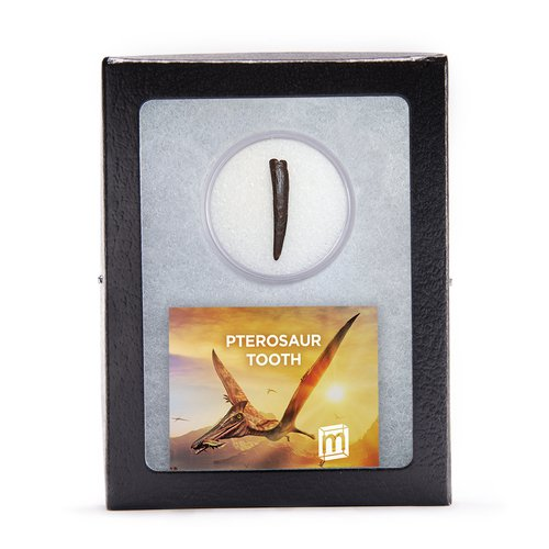 Pterosaur Tooth